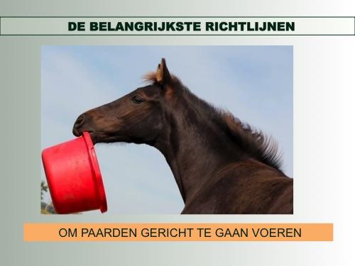 gezonde voeding paard