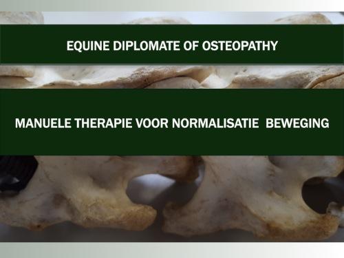 osteopathie-paard