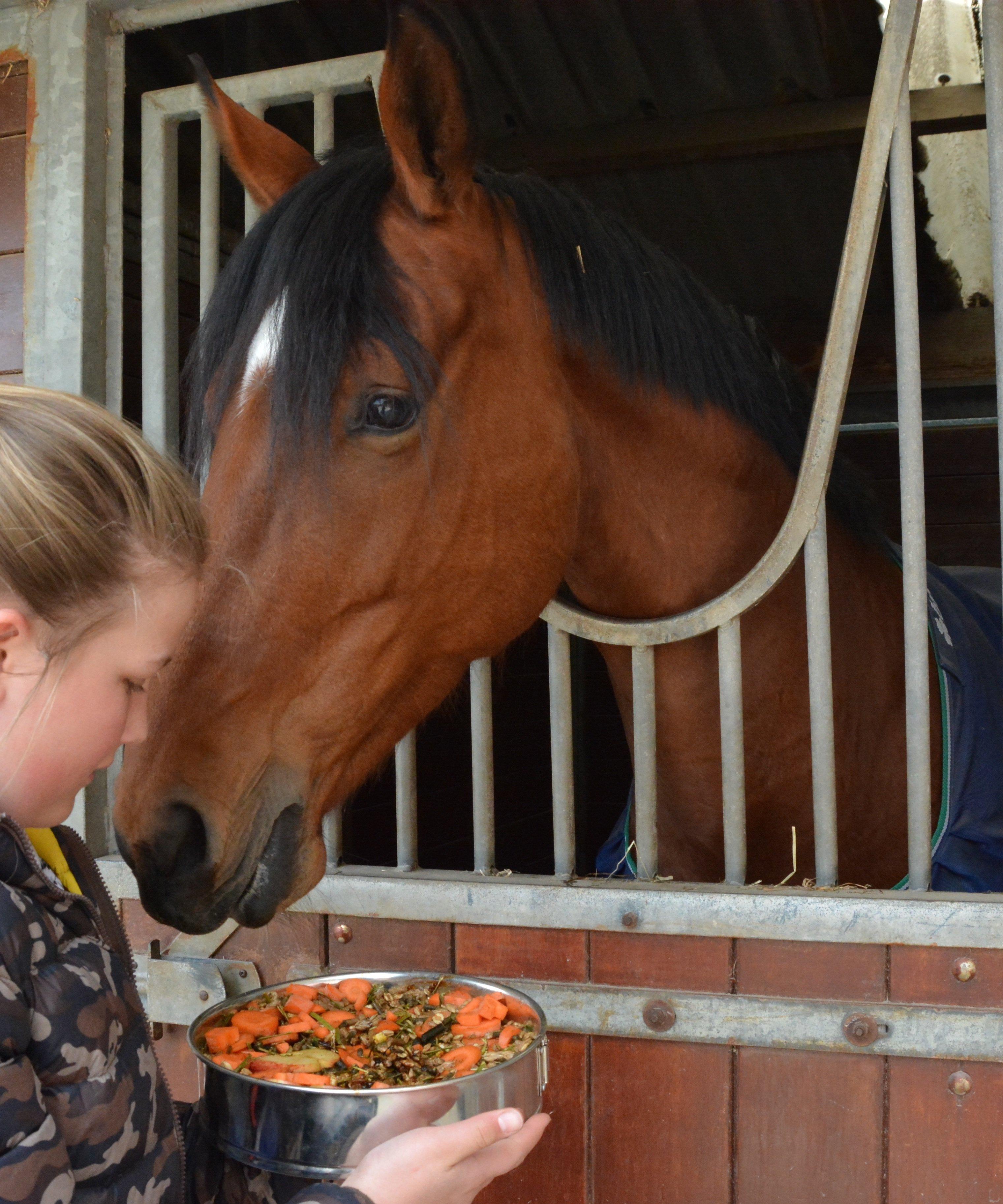hoeveel kg hooi per paard per dag