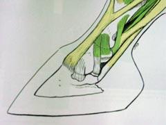 Analyse kreupelheden/bewegingsproblemen